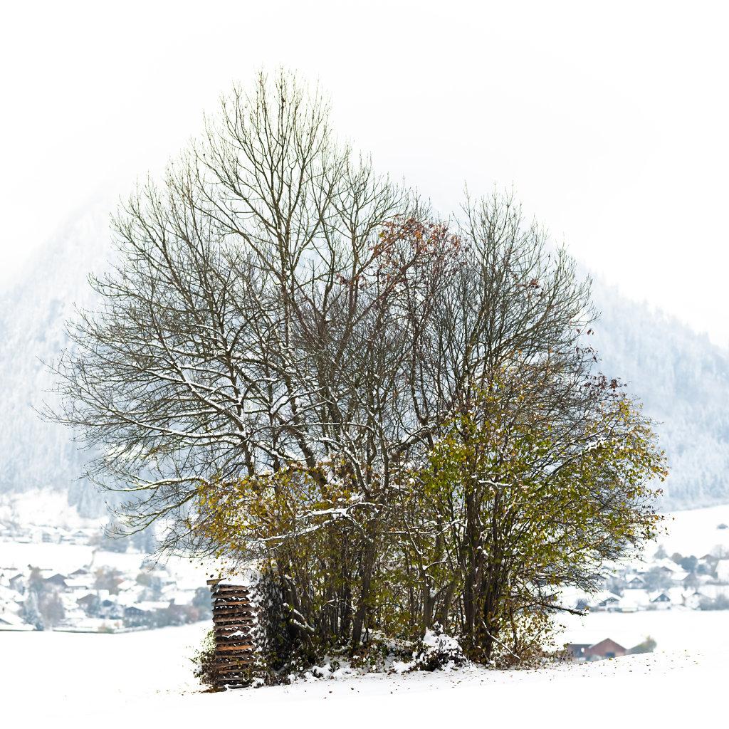 Baumgruppe, Pfronten